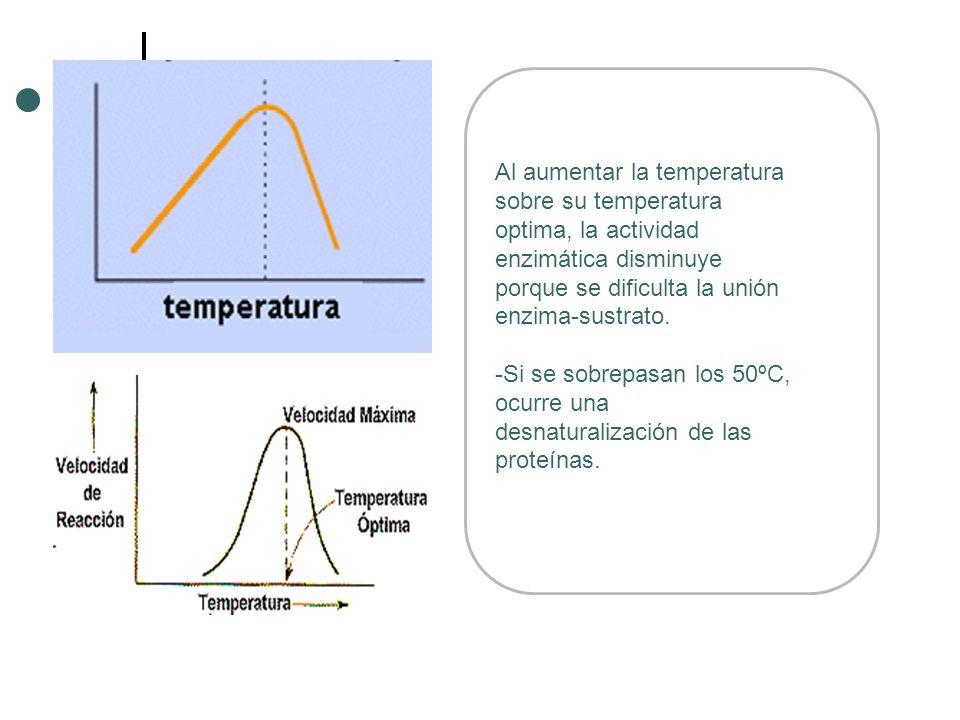 Al aumentar la temperatura sobre su temperatura optima, la actividad enzimática disminuye porque se dificulta la unión enzima-sustrato. -Si se sobrepa