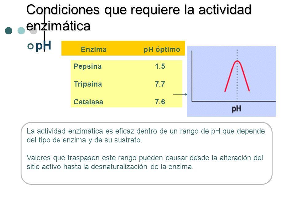 pH Pepsina 1.5 Tripsina 7.7 Catalasa 7.6 Enzima pH óptimo Condiciones que requiere la actividad enzimática La actividad enzimática es eficaz dentro de