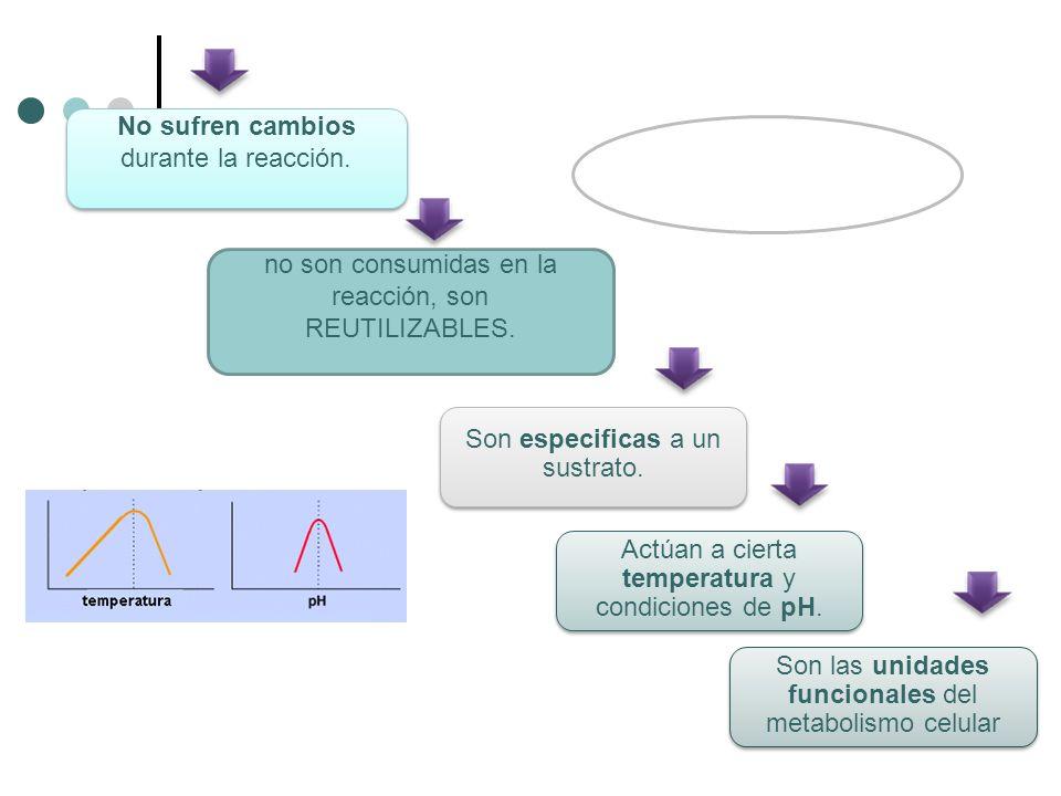 Modelos de acción enzimática.