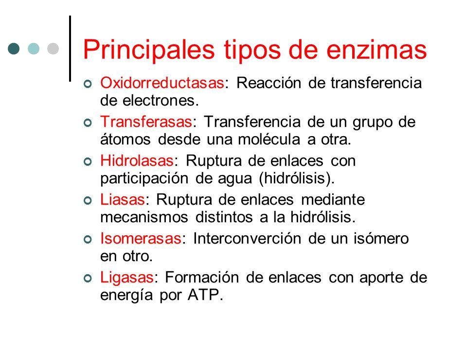 Principales tipos de enzimas Oxidorreductasas: Reacción de transferencia de electrones. Transferasas: Transferencia de un grupo de átomos desde una mo