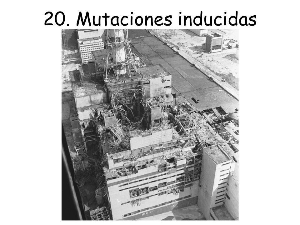 Descubrimiento de la mutación inducida Mutágeno y especificidad mutacional Mecanismos de la mutación inducida Mutágenos químicos Mutágenos físicos Mutágenos biológicos 20.
