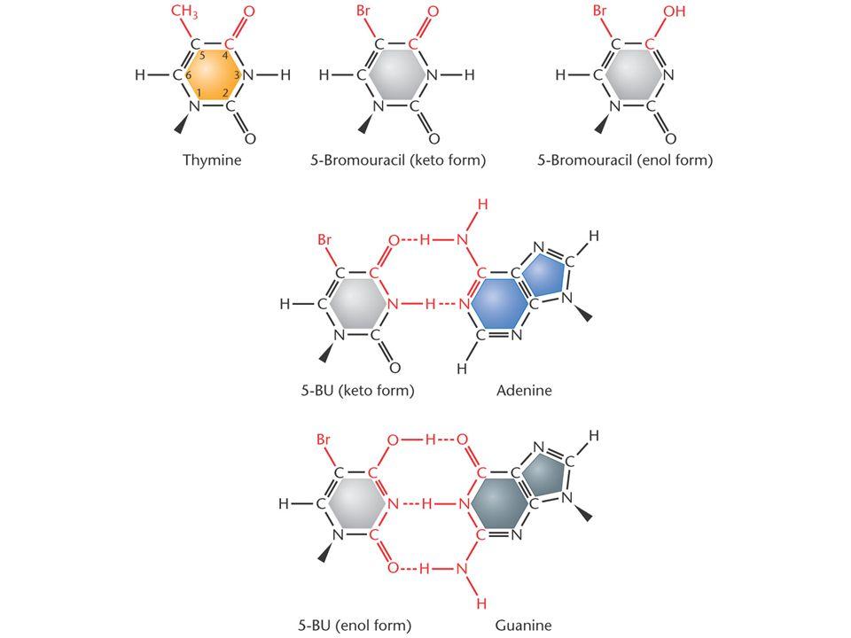 transición debida a 5-BU: AT -> GC