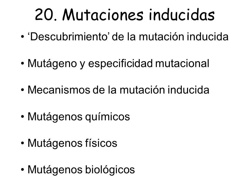 Descubrimiento de la mutación inducida Mutágeno y especificidad mutacional Mecanismos de la mutación inducida Mutágenos químicos Mutágenos físicos Mut