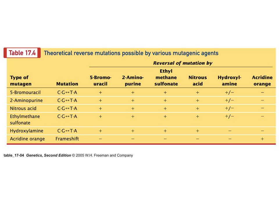 mutágenos físicos físicos (radiación) ionizante: rayos X,,,, neutrones no ionizante: luz UV, calor