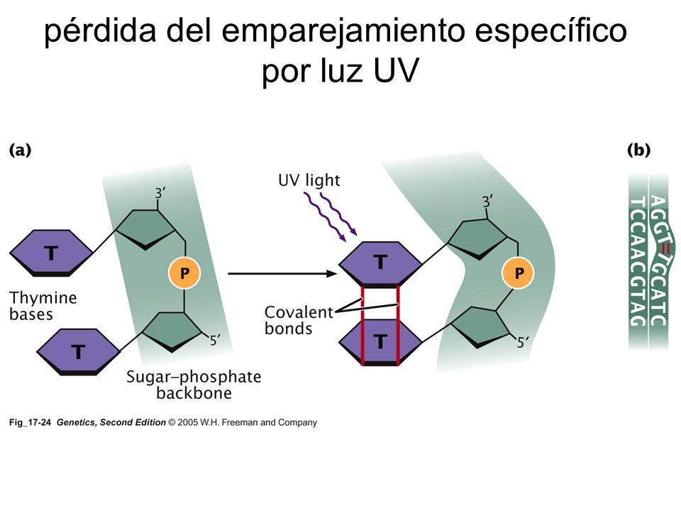 mutágenos biológicos biológicos transposones virus