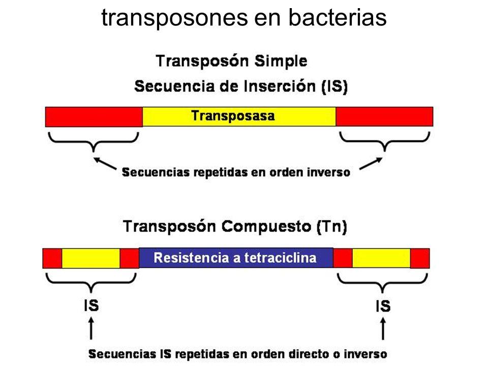 transposones en bacterias