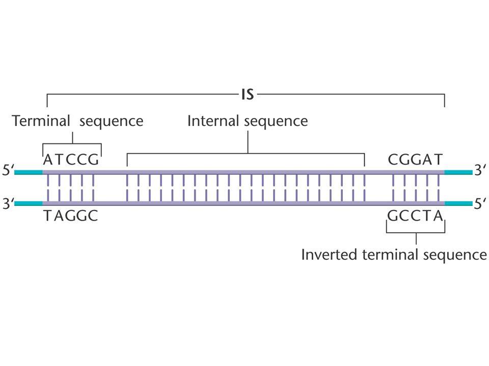 Alu: 280 pb; 750.000 copias/genoma (LINE, ejemplo de retrotransposón) (SINE, ejemplo de retropseudogen) transposones en mamíferos