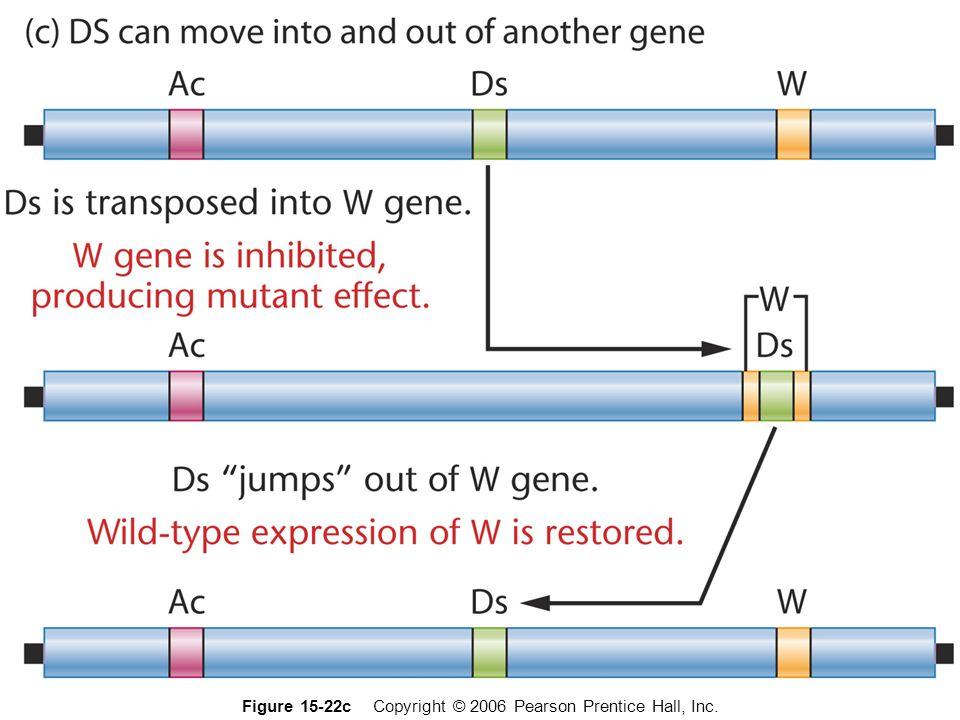 transposones en Drosophila elementos copia , elementos P y elementos FB transposones en Drosophila