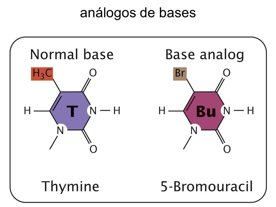 análogos de bases