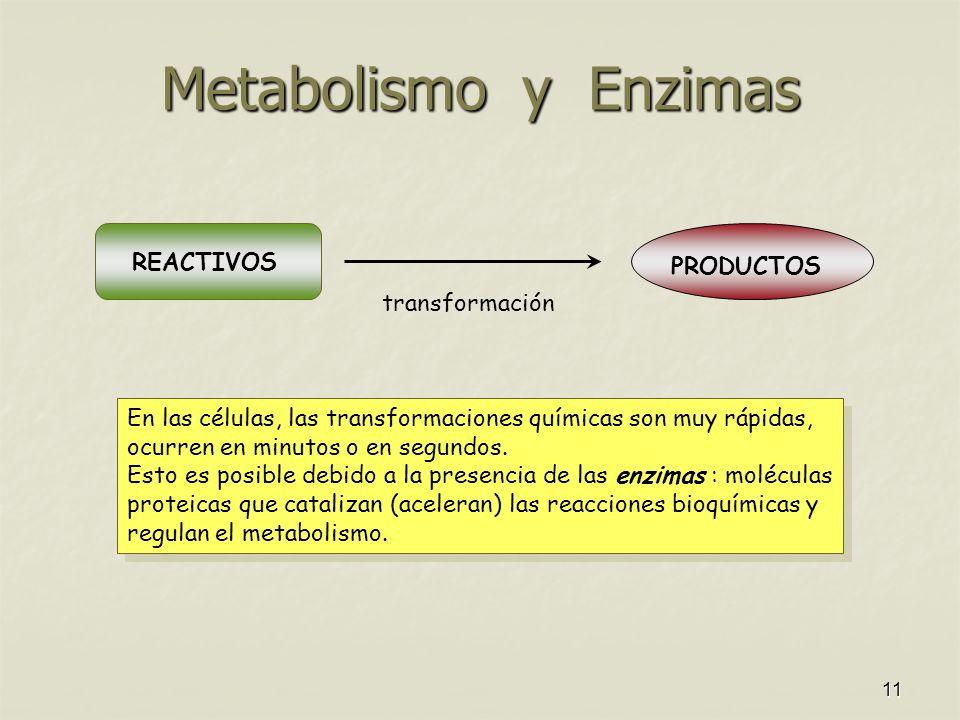 11 Metabolismo y Enzimas En las células, las transformaciones químicas son muy rápidas, ocurren en minutos o en segundos. Esto es posible debido a la