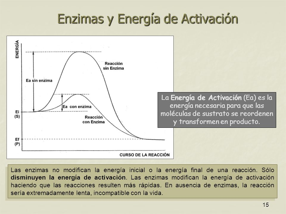 15 Enzimas y Energía de Activación Las enzimas no modifican la energía inicial o la energía final de una reacción. Sólo disminuyen la energía de activ