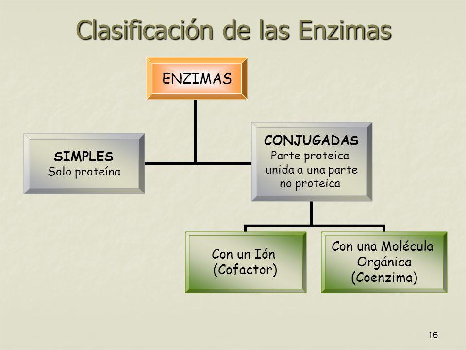 16 Clasificación de las Enzimas ENZIMAS SIMPLES Solo proteína CONJUGADAS Parte proteica unida a una parte no proteica Con un Ión (Cofactor) Con una Molécula Orgánica (Coenzima)