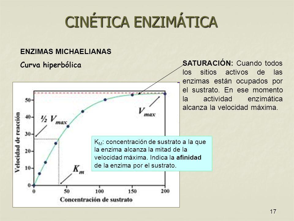 17 ENZIMAS MICHAELIANAS Curva hiperbólica SATURACIÓN: Cuando todos los sitios activos de las enzimas están ocupados por el sustrato. En ese momento la