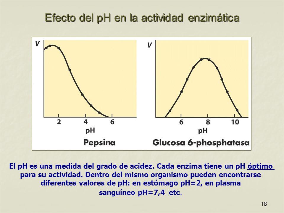 18 Efecto del pH en la actividad enzimática El pH es una medida del grado de acidez. Cada enzima tiene un pH óptimo para su actividad. Dentro del mism