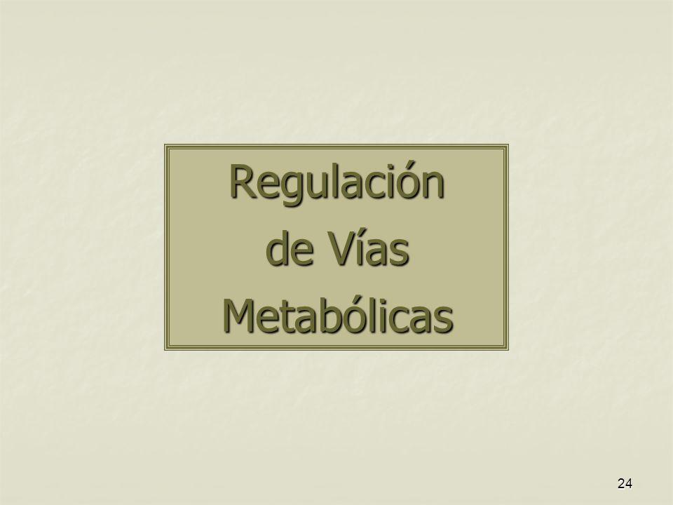 24 Regulación de Vías Metabólicas