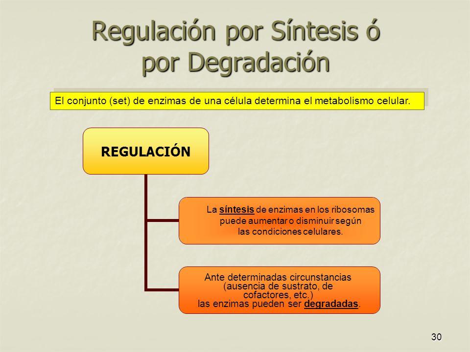30 Regulación por Síntesis ó por Degradación El conjunto (set) de enzimas de una célula determina el metabolismo celular. La síntesis de enzimas en lo