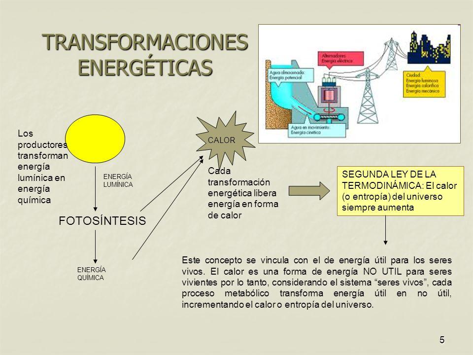 5 TRANSFORMACIONES ENERGÉTICAS FOTOSÍNTESIS ENERGÍA LUMÍNICA CALOR ENERGÍA QUÍMICA Los productores transforman energía lumínica en energía química Cada transformación energética libera energía en forma de calor SEGUNDA LEY DE LA TERMODINÁMICA: El calor (o entropía) del universo siempre aumenta Este concepto se vincula con el de energía útil para los seres vivos.