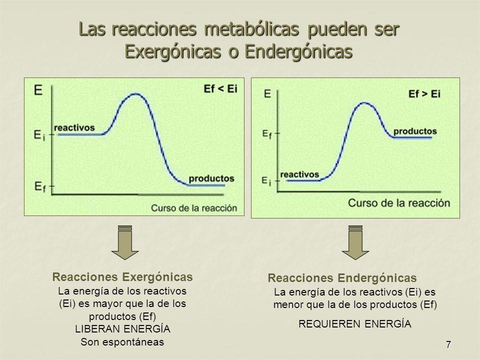 7 Las reacciones metabólicas pueden ser Exergónicas o Endergónicas Reacciones Exergónicas La energía de los reactivos (Ei) es mayor que la de los productos (Ef) LIBERAN ENERGÍA Son espontáneas Reacciones Endergónicas La energía de los reactivos (Ei) es menor que la de los productos (Ef) REQUIEREN ENERGÍA