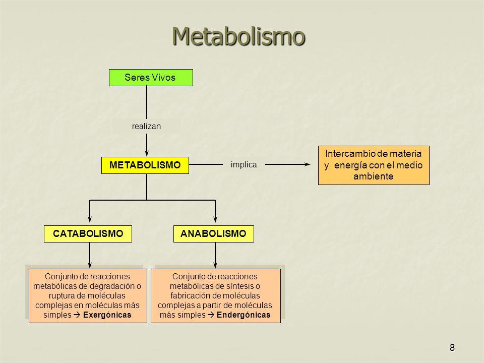 8 Metabolismo Seres Vivos realizan METABOLISMO Intercambio de materia y energía con el medio ambiente implica CATABOLISMOANABOLISMO Conjunto de reacciones metabólicas de síntesis o fabricación de moléculas complejas a partir de moléculas más simples Endergónicas Conjunto de reacciones metabólicas de degradación o ruptura de moléculas complejas en moléculas más simples Exergónicas