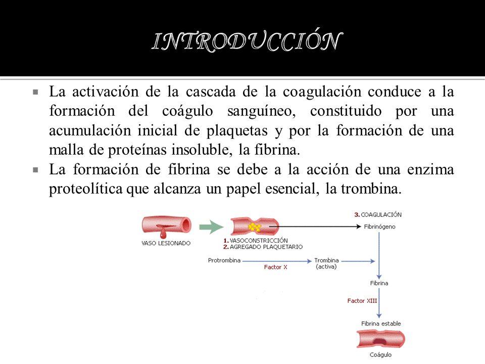 La activación de la cascada de la coagulación conduce a la formación del coágulo sanguíneo, constituido por una acumulación inicial de plaquetas y por