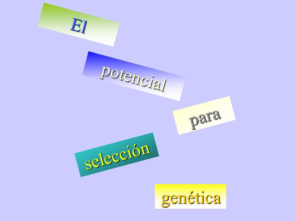 El potencial para selección genética