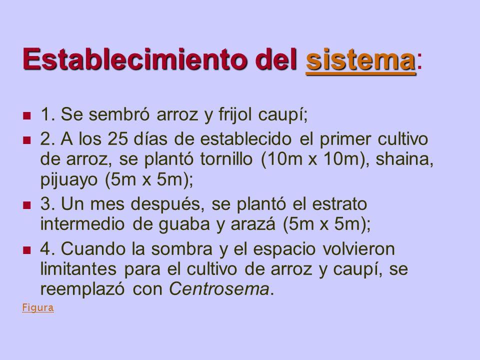 Sistema silvopastoril pijuayo / Centrosema: resultados a los 4 años Después de 4 años, la densidad aparente (0-5cm) fue reducida de 1.65g / cm 3 a 1.45g / cm 3, independiente del pastoreo.