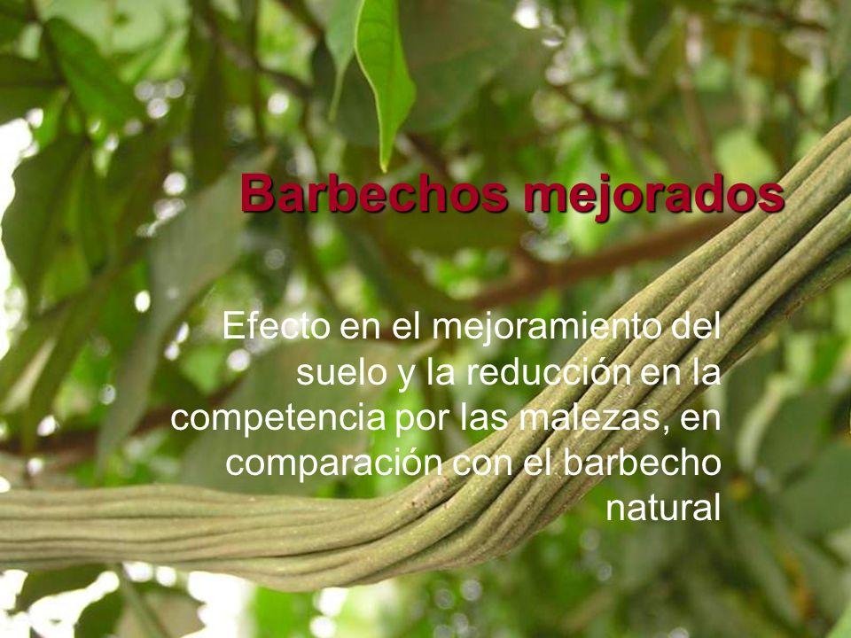 Barbechos mejorados Efecto en el mejoramiento del suelo y la reducción en la competencia por las malezas, en comparación con el barbecho natural