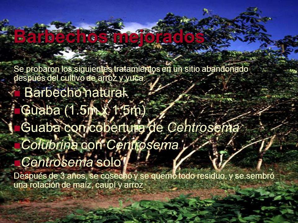 Barbechos mejorados Se probaron los siguientes tratamientos en un sitio abandonado después del cultivo de arroz y yuca: Barbecho natural Guaba (1.5m x