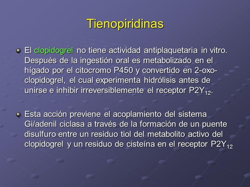 Tienopiridinas El clopidogrel no tiene actividad antiplaquetaria in vitro. Después de la ingestión oral es metabolizado en el hígado por el citocromo