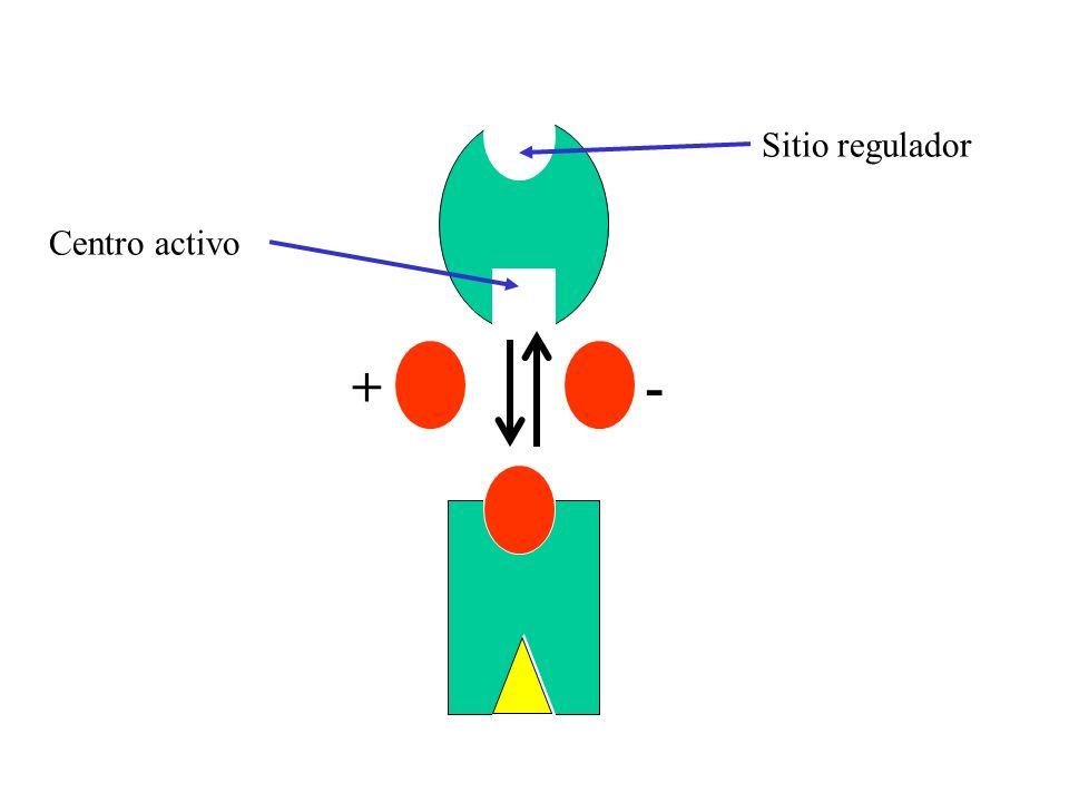 -+ Sitio regulador Centro activo