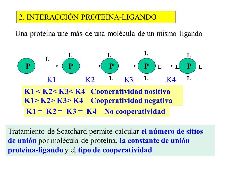 2. INTERACCIÓN PROTEÍNA-LIGANDO Una proteína une más de una molécula de un mismo ligando PPPPP L LL L L L L L LL L K1 K2 K3 K4 K1 < K2< K3< K4 Coopera