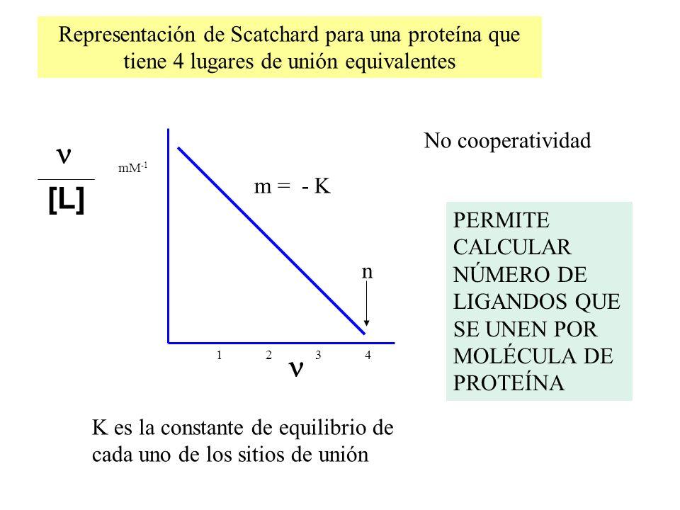 m = - K [L] mM -1 1 2 3 4 n No cooperatividad Representación de Scatchard para una proteína que tiene 4 lugares de unión equivalentes K es la constant