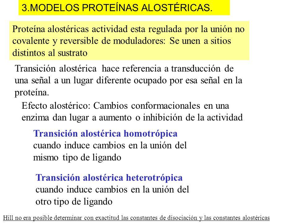 3.MODELOS PROTEÍNAS ALOSTÉRICAS. Efecto alostérico: Cambios conformacionales en una enzima dan lugar a aumento o inhibición de la actividad Proteína a
