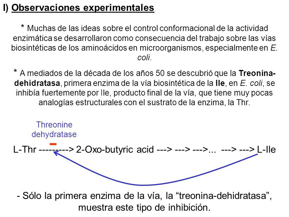 I) Observaciones experimentales * Muchas de las ideas sobre el control conformacional de la actividad enzimática se desarrollaron como consecuencia de