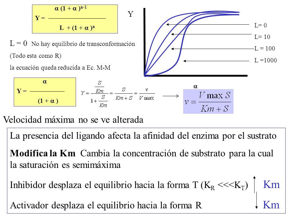 L= 0 L= 10 L = 100 L =1000 L = 0 No hay equilibrio de transconformación (Todo esta como R) la ecuación queda reducida a Ec. M-M Y La presencia del lig