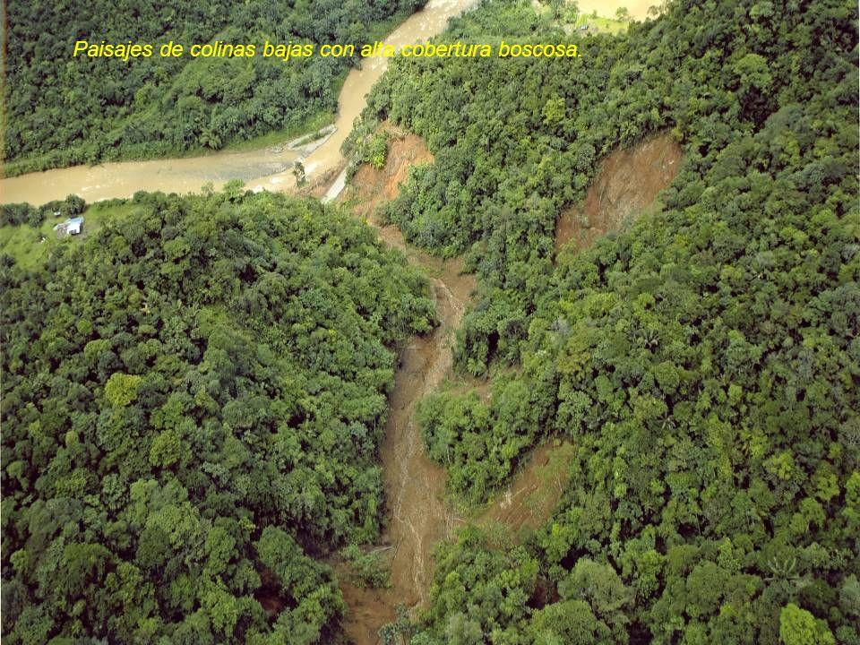 Paisajes de colinas bajas con alta cobertura boscosa.