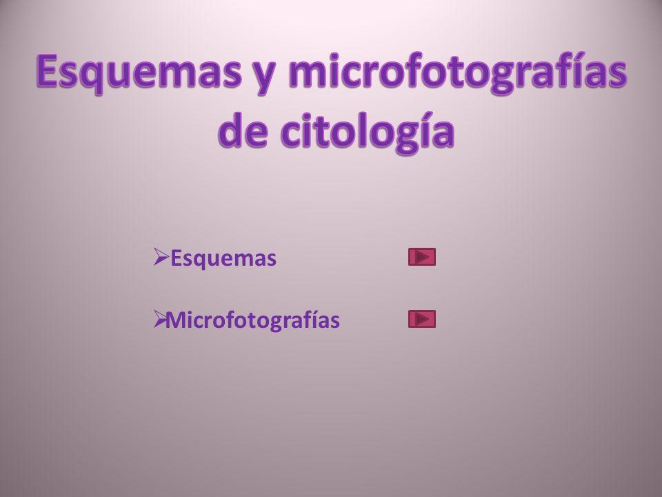 Esquemas de virus y tipos celulares 1.- Virus 2.- Célula procariota 3.- Célula eucariota animal 4.- Célula eucariota vegetal