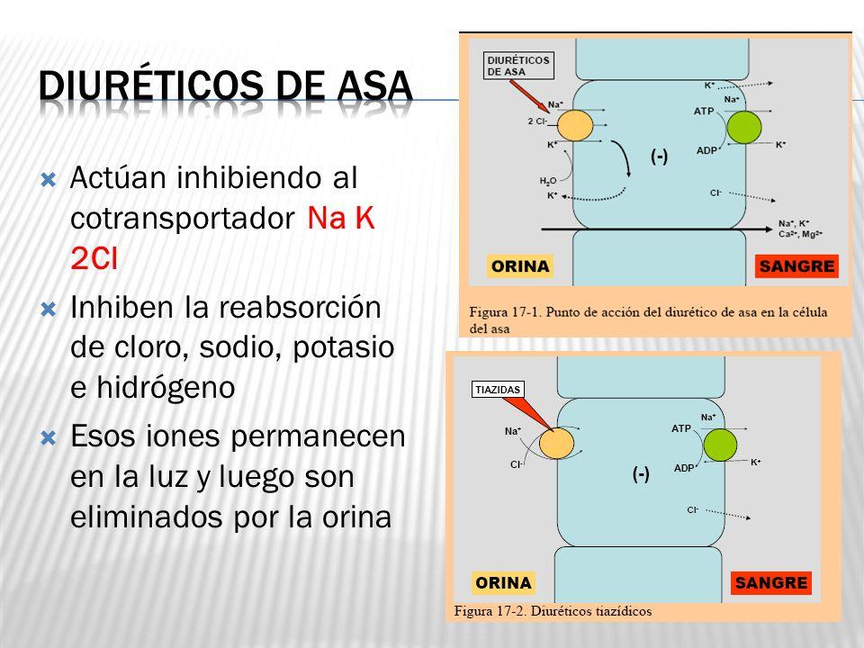 Actúan inhibiendo al cotransportador Na K 2Cl Inhiben la reabsorción de cloro, sodio, potasio e hidrógeno Esos iones permanecen en la luz y luego son