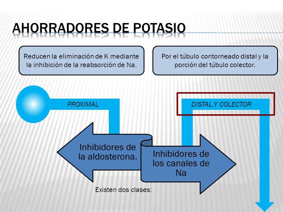 PROXIMAL ASA DE HENLE DISTAL Y COLECTOR Reducen la eliminación de K mediante la inhibición de la reabsorción de Na. Por el túbulo contorneado distal y