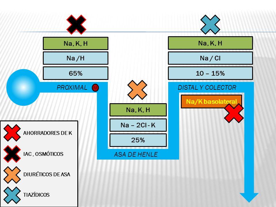 PROXIMAL ASA DE HENLE DISTAL Y COLECTOR 65% 25% 10 – 15% Na /H Na – 2Cl - K Na / Cl Na, K, H M Na/K basolateral IAC, OSMÓTICOS DIURÉTICOS DE ASA TIAZÍ