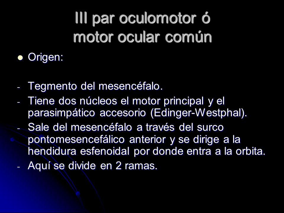 III par oculomotor ó motor ocular común Origen: Origen: - Tegmento del mesencéfalo. - Tiene dos núcleos el motor principal y el parasimpático accesori