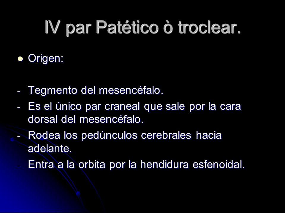 IV par Patético ò troclear. Origen: Origen: - Tegmento del mesencéfalo. - Es el único par craneal que sale por la cara dorsal del mesencéfalo. - Rodea