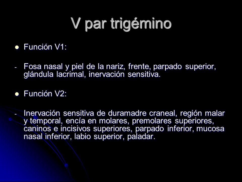 V par trigémino Función V1: Función V1: - Fosa nasal y piel de la nariz, frente, parpado superior, glándula lacrimal, inervación sensitiva. Función V2
