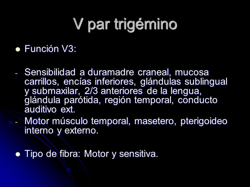 V par trigémino Función V3: Función V3: - Sensibilidad a duramadre craneal, mucosa carrillos, encías inferiores, glándulas sublingual y submaxilar, 2/