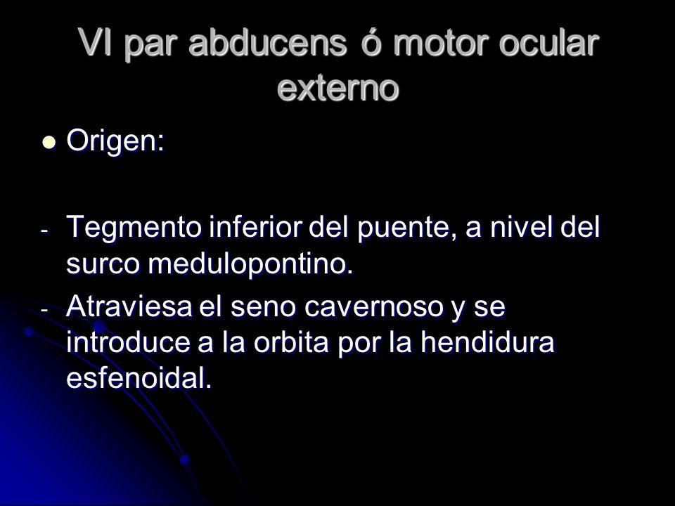 VI par abducens ó motor ocular externo Origen: Origen: - Tegmento inferior del puente, a nivel del surco medulopontino. - Atraviesa el seno cavernoso