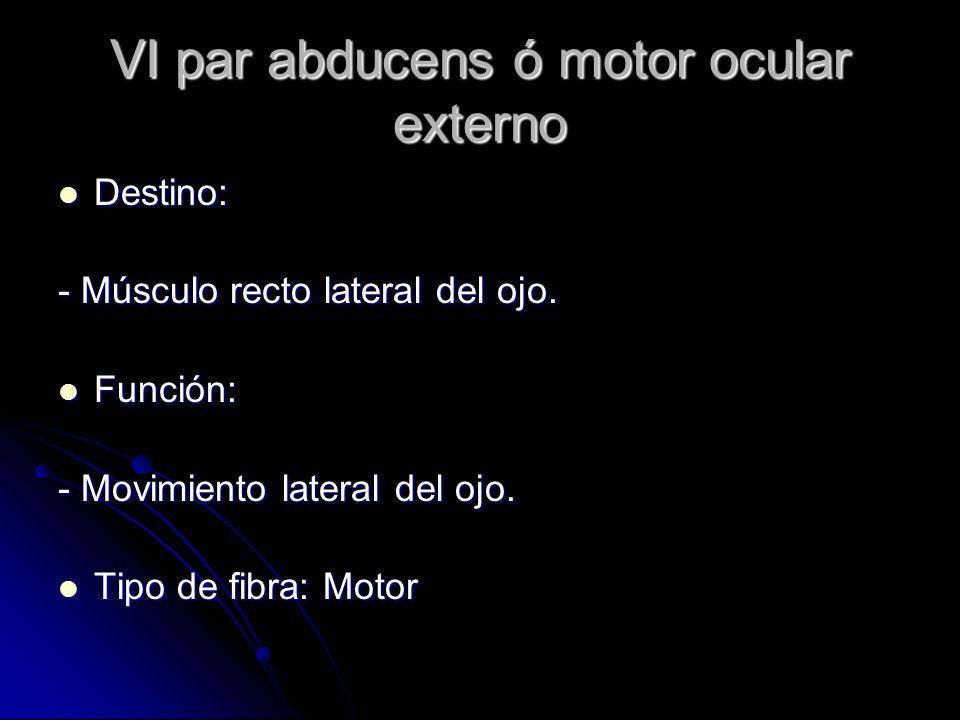 VI par abducens ó motor ocular externo Destino: Destino: - Músculo recto lateral del ojo. Función: Función: - Movimiento lateral del ojo. Tipo de fibr