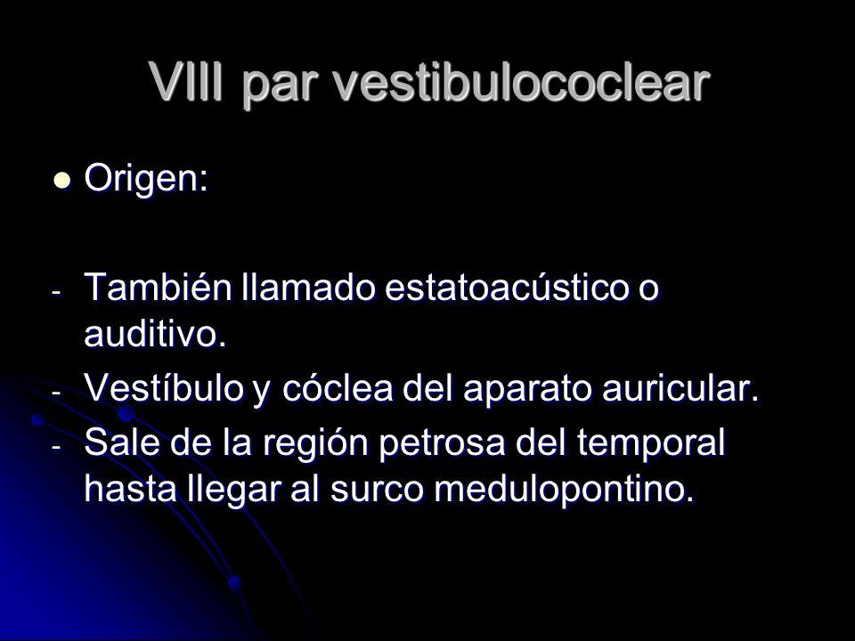 VIII par vestibulococlear Origen: Origen: - También llamado estatoacústico o auditivo. - Vestíbulo y cóclea del aparato auricular. - Sale de la región