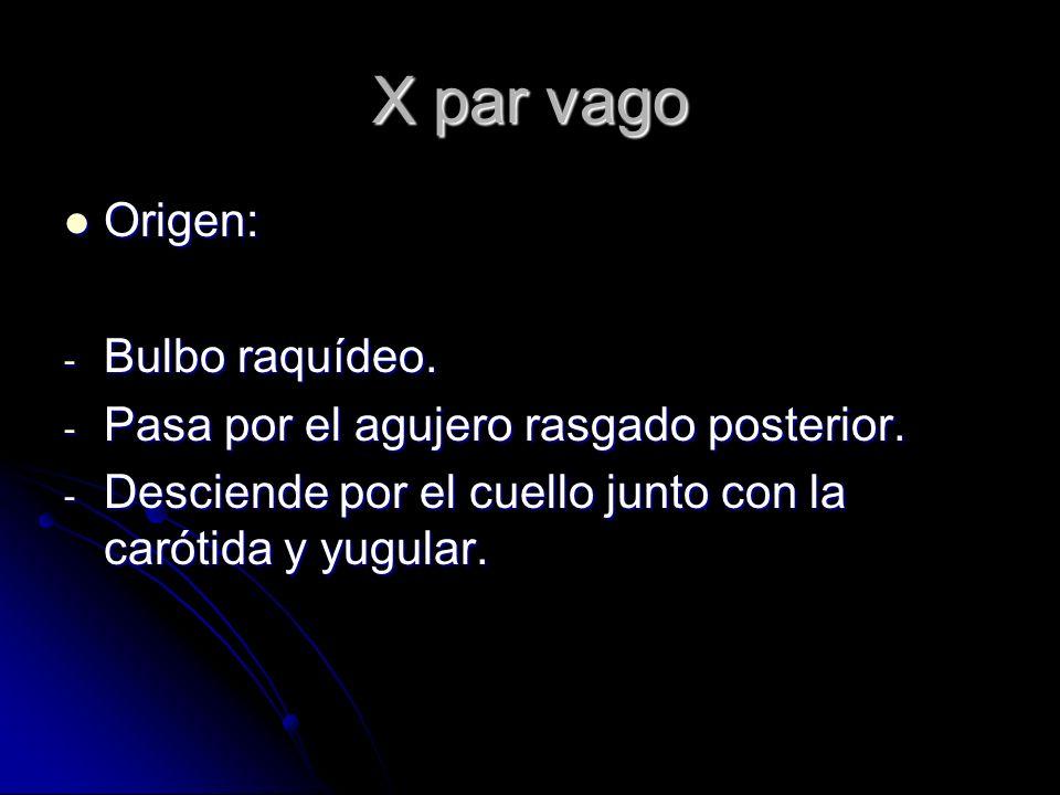 X par vago Origen: Origen: - Bulbo raquídeo. - Pasa por el agujero rasgado posterior. - Desciende por el cuello junto con la carótida y yugular.