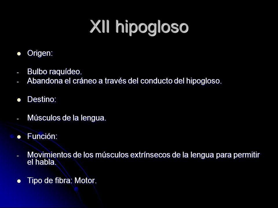 XII hipogloso Origen: Origen: - Bulbo raquídeo. - Abandona el cráneo a través del conducto del hipogloso. Destino: Destino: - Músculos de la lengua. F