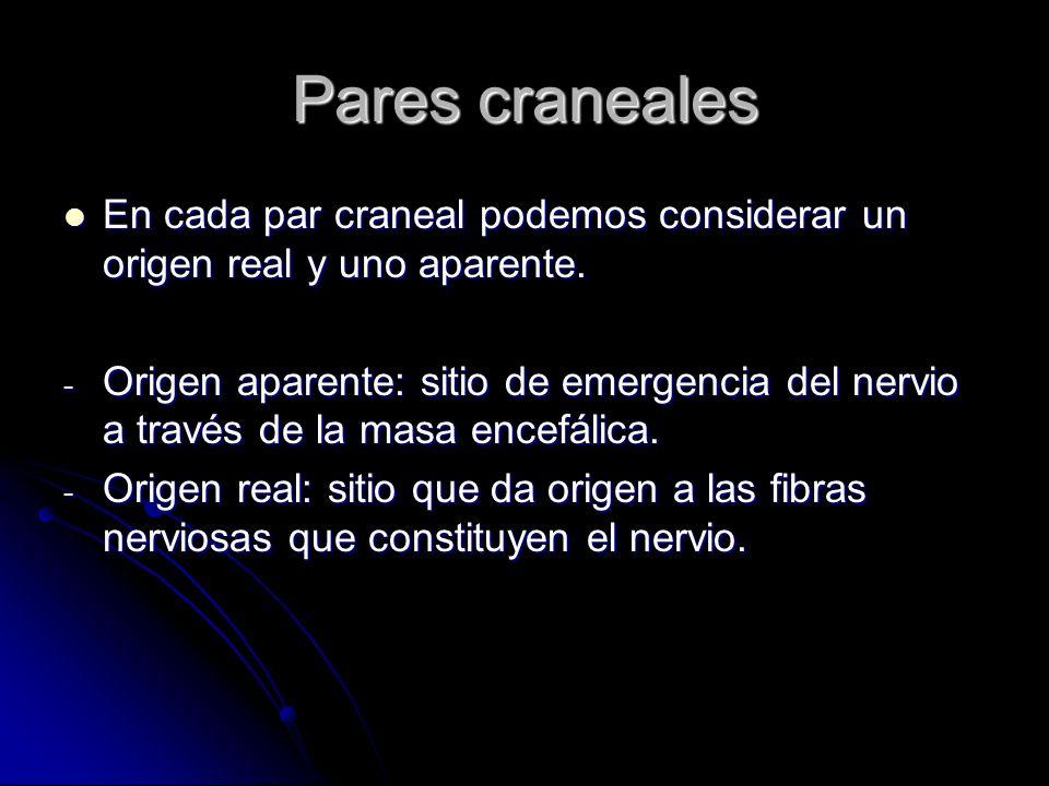 Pares craneales En cada par craneal podemos considerar un origen real y uno aparente. En cada par craneal podemos considerar un origen real y uno apar